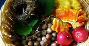 Natures bounty the best wild edible plants