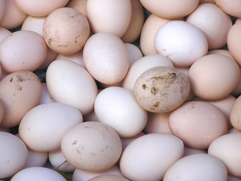 How to raise chickens for eggs and meat - fresh eggs
