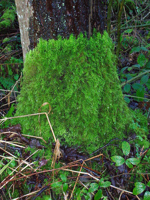 Finding your way without a compass - moss